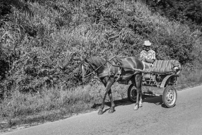 Farmer and horse cart