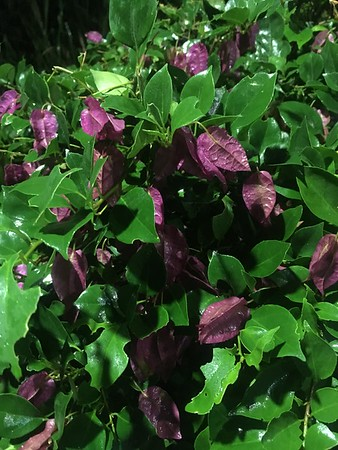 Cuba Flora