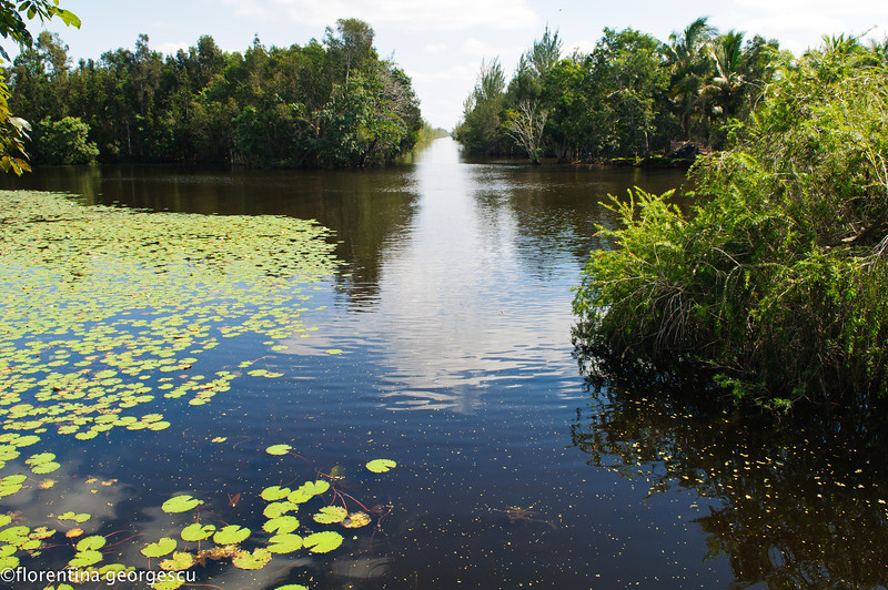 Swampland and canals at Boca de Guama, Zapata Peninsula, Cuba