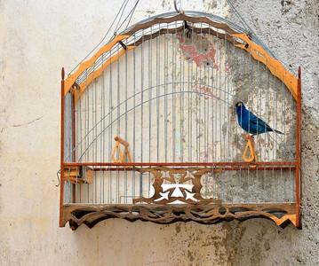 Bird near doorway in Havana