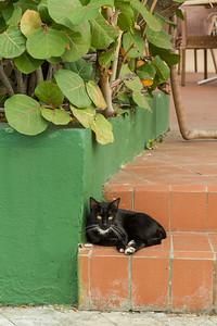 Hotel Jagua kitten