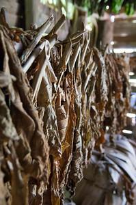 Tobaco Farm