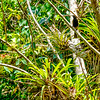A bird seen on our hike to Salto del Caburni in Topes de Collantes protected area.