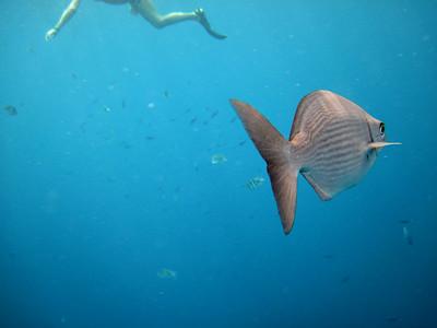 Snorkeling, Cayman Islands.