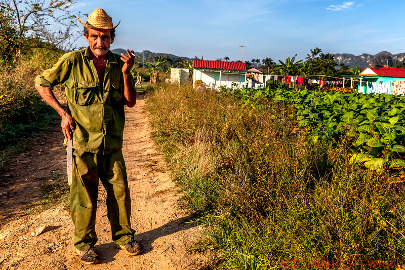 A character in the tobacco fields