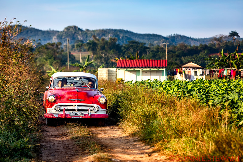 "A classic ""taxi"" car in Vinales driving in the tobacco land"