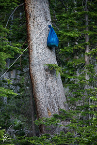 Putting our food in a bag and tying it high to prevent bears from getting to our stuff.