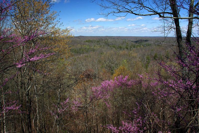 The hills of Kentucky