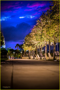 Lighted walkway and trees leading to the banks of the Hillsborough River.