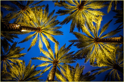Lighted Palm trees situated on the Ashley Street side of CHP.
