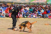 Perro anti drogas - Feria agropecuaria & artesanal - Chinchero - Cusco - Perú<br /> <br /> Drug dog - Agricultural & Crafts Fair - Chinchero - Cusco - Peru<br /> <br /> Drugshond - Landbouw & Ambachtenfeest - Chinchero - Cusco - Peru<br /> <br /> Chien de drogue - Foire agricole et artisanale - Chinchero - Cusco - Pérou