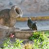Dos palomas sentadas en una barra para palomas - Plaza de las Nazarenas - Cusco - Perú<br /> <br /> Two pigeons seated at a pigeon watering hole - Plaza de las Nazarenas - Cusco - Peru<br /> <br /> Twee duiven gezeten aan een duivencafé - Plaza de las Nazarenas - Cusco - Peru<br /> <br /> Deux pigeons assis au bar pour pigeons - Plaza de las Nazarenas - Cusco - Pérou
