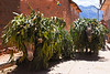 Productos de importación: burros (África) & eucalyptus (Australia) - Maras - Valle Sagrado de los Incas - Cusco - Perú<br /> <br /> Products of import: donkeys (Africa) & eucalyptus (Oz) - Maras - Valle Sagrado de los Incas - Cusco - Peru<br /> <br /> Invoerproducten: ezels (Afrika) en eucalyptus (Australië) - Maras - Valle Sagrado de los Incas - Cusco - Peru<br /> <br /> Produits d'importation: ânes (Afrique) & eucalyptus (Australie) - Maras - Valle Sagrado de los Incas - Cusco - Pérou