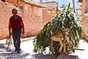 Agricultor y su bestia de carga - Maras - Valle Sagrado de los Incas - Cusco - Perú<br /> <br /> Farmer and his beast of burden - Maras - Valle Sagrado de los Incas - Cusco - Peru<br /> <br /> Landbouwer met zijn pakezel - Maras - Valle Sagrado de los Incas - Cusco - Peru<br /> <br /> Agriculteur accompagné de son âne - Maras - Valle Sagrado de los Incas - Cusco - Pérou