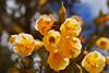 Flora local - Moray - Maras - Valle Sagrado de los Incas - Cusco - Perú<br /> <br /> Local flora - Moray - Maras - Valle Sagrado de los Incas - Cusco - Peru<br /> <br /> Lokale flora - Moray - Maras - Valle Sagrado de los Incas - Cusco - Peru<br /> <br /> Flore locale - Moray - Maras - Valle Sagrado de los Incas - Cusco - Pérou