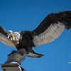 Condor monument - Ocongate - Quispicanchi - Cusco - Peru
