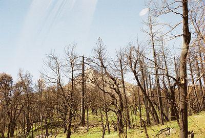 5/8/04 Cuyamaca Peak