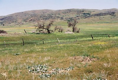 5/8/04 Meadows off Hwy 79 north of Cuyamaca State Park Headquarters