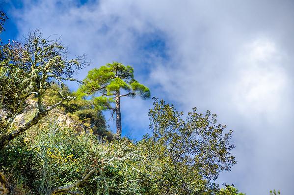 Troodos National Park