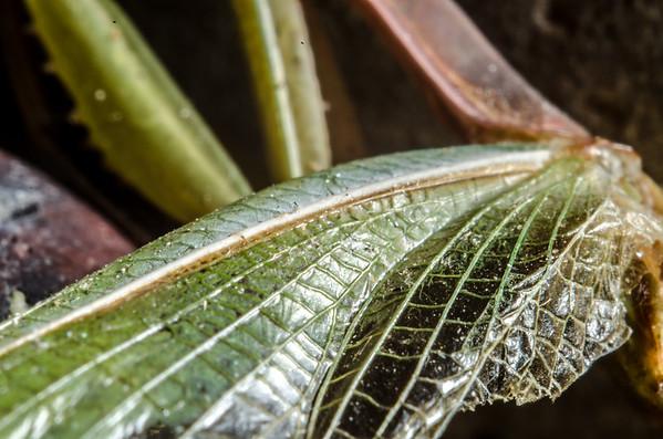 Macroshots of a Praying Mantis