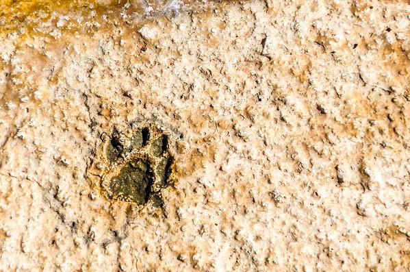 Footprints in Concrete