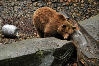They keep bears in the moat in Český Krumlov