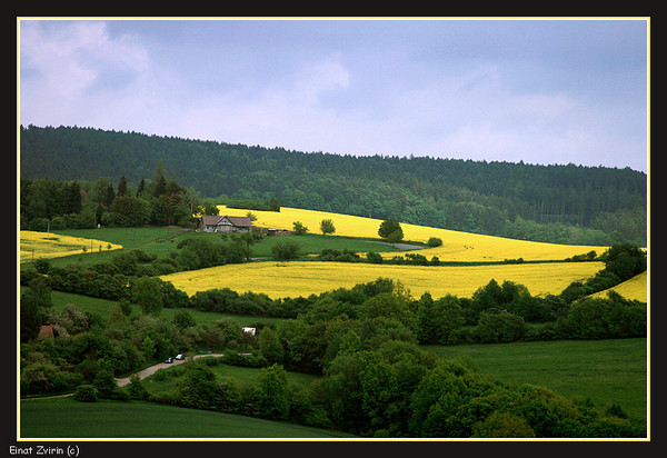 The Czech Republic - Canola Fields