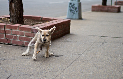 A dog finding his way in the concrete jungle.