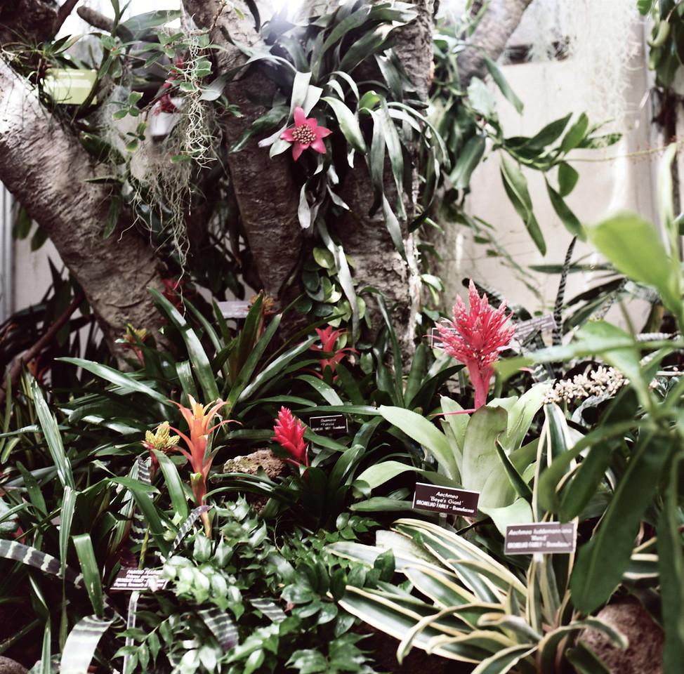 Bromeliads. Hasselblad 500c/m, Kodak New Portra 160.