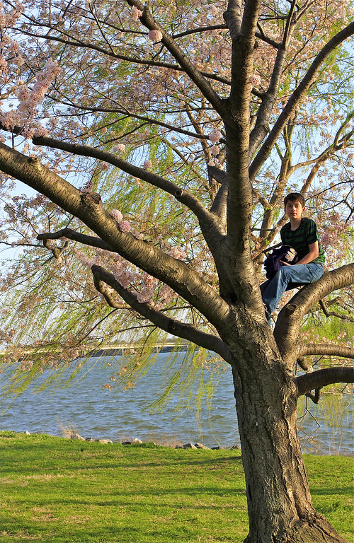 A young boy who offered to pick some cherry blossoms for me...