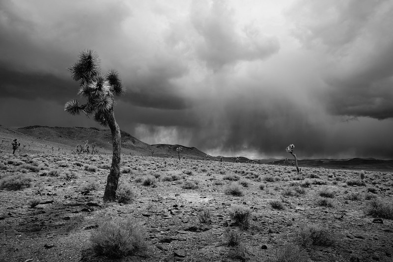 AFTERNOON THUNDERSTORM APPROACHING THE JOSHUA TREE GROVE