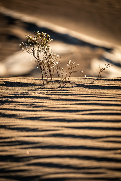 LIFE GOES ON AT THE MESQUITE FLAT SAND DUNES