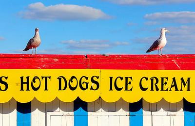 An avian hot-dog meets a cool customer!