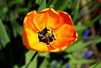 Daffodill Hill (S5) 004