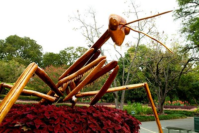 18-foot praying mantis - one of 8 different giant insects from Dave Rogers' Big Bugs collection.