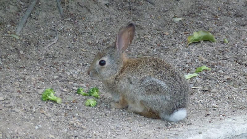 We saw several bunnies on the resort grounds.