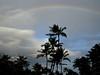 Big Island - Palm trees at Hilton Village