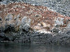 Penguin colony.  The brown stuff is guano (i.e., penguine poop).