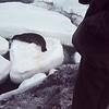 Weddell seals (?)