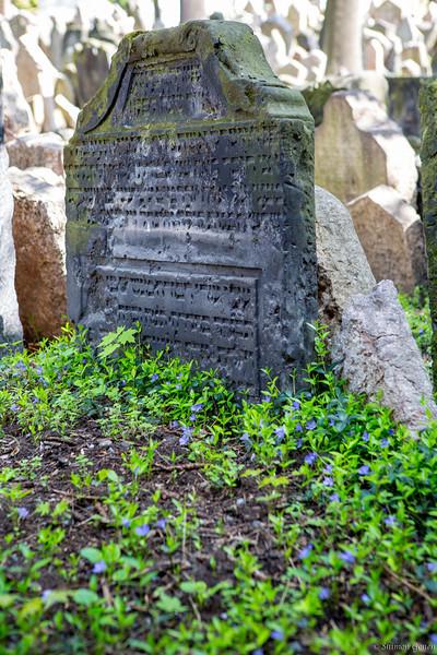 Prague Old Jewish Cemetery - new life