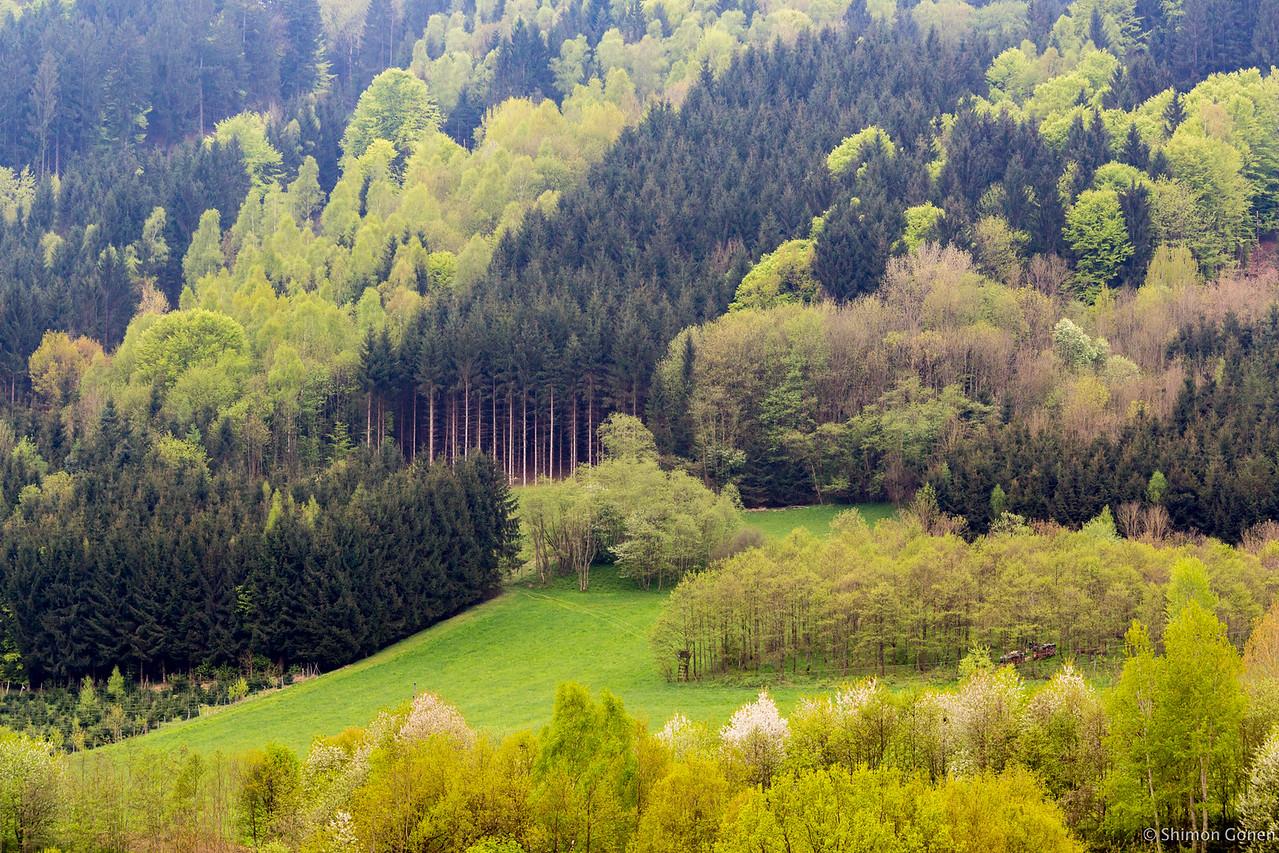 Danube river trees