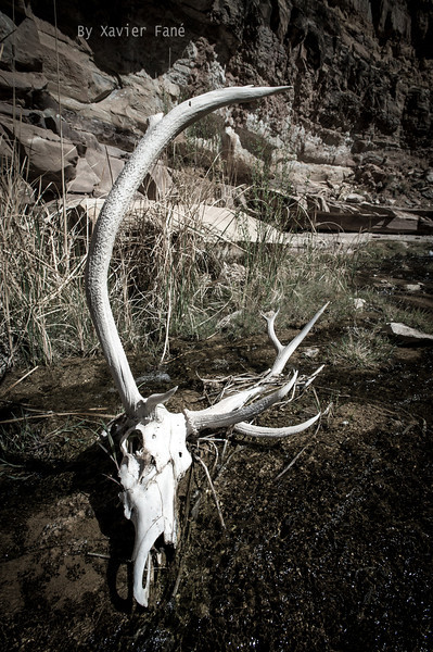 An eerie encounter... how did this elk rack get here?, a flood event?, an adventurous, independent elk that went on a last  journey? The desert holds many mysteries.