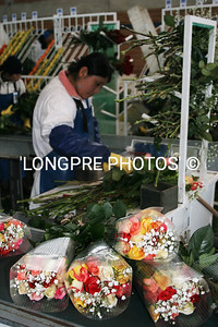 Worker at 'ROSEDEX' rose farm.