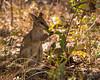 Wallaby at Cicada Lodge