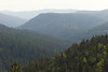 """Carson National Forrest from """"high road"""" to Taos"""