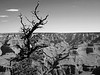 Tree against the sky,south rim, Grand Canyon