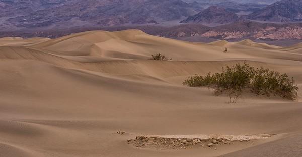 David Reams Photography in Death Valley