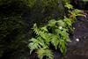 Fallen Star in fern along path at Rock City