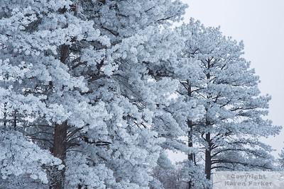 Dawson Butte - Castle Rock, Colorado - December, 2013