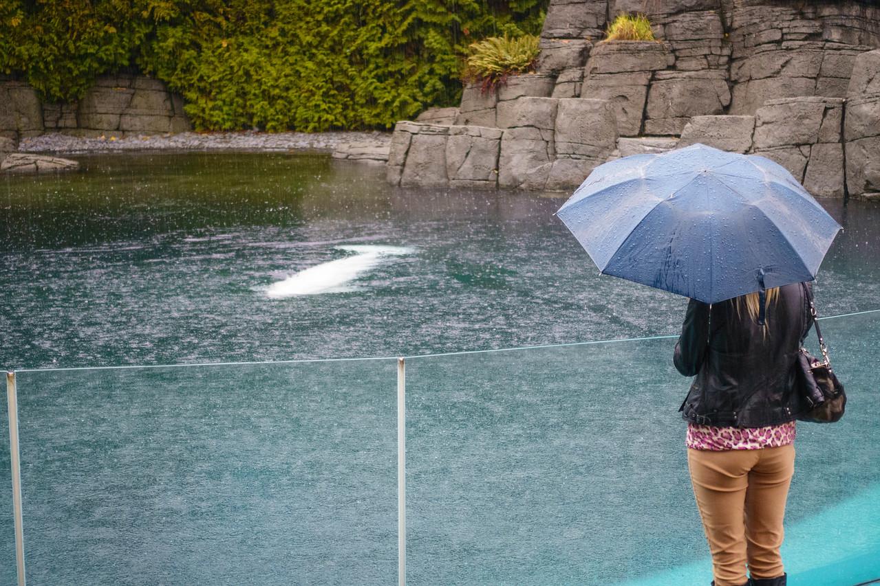 Watching the Belugas